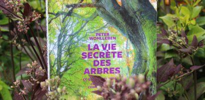 Livre : La vie secrète des arbres de Peter Wohlleben